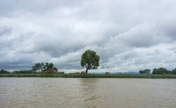 Lonely tree and cloudy sky landscape view, Mrauk u Rakhine State Myanmar