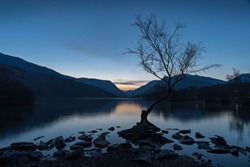 Lonely Tree at Llyn Padarn in Llanberis taken at Dawn during the Blue Hour