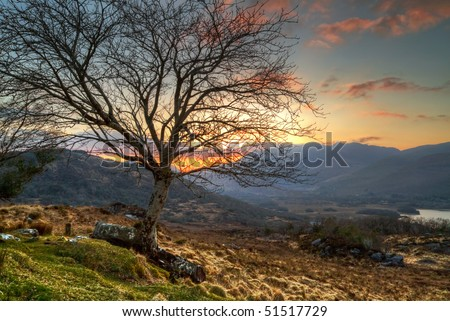 Lonely tree at sunset in irish mountains
