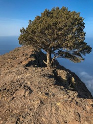 Lonely tree at top of a summit over the Atlantic ocean