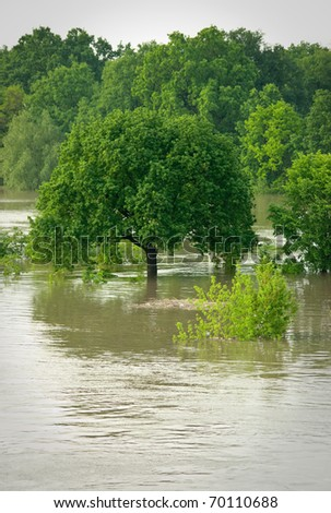 Lonely tree during the flood - stock photo