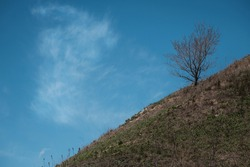 Lonely tree growing on a mountain against a blue sky. Reaching the top. Move uphill towards your goal. Move uphill.