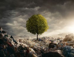 Lonely tree growing on the garbage dump, field at the sunset with copy space