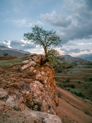 Lonely tree growing on top of the rock. Vertical view. Vintage toning