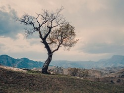 Lonely tree growing on top of the rock. Vintage toning