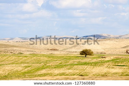 Lonely tree in a desert amid the hills beneath the clouds - stock photo