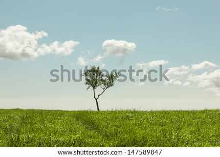 Lonely tree in a grassy meadow on a beautiful summer day