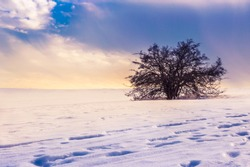 Lonely tree in a magical winter landscape with snow and dramatic sky in Rhoen Mountains, Hesse, Germany