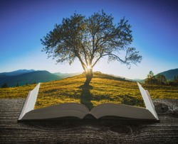 Lonely tree in a mountain valley at sunset on the pages of an open magical book. Majestic landscape. Travel and education concept.