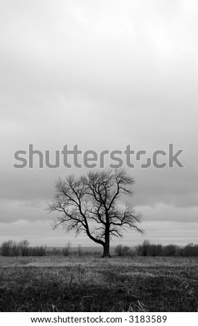 Lonely tree in a spring field. Black and white photo.