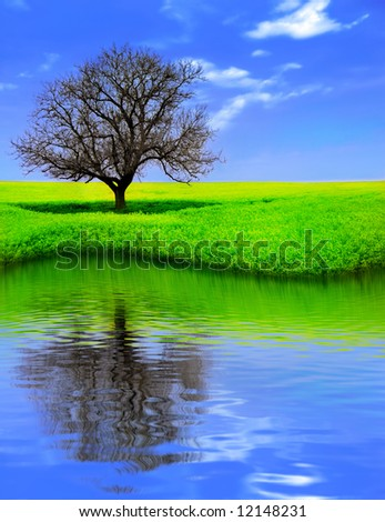 Lonely Tree in a Yellow Field reflecting - stock photo