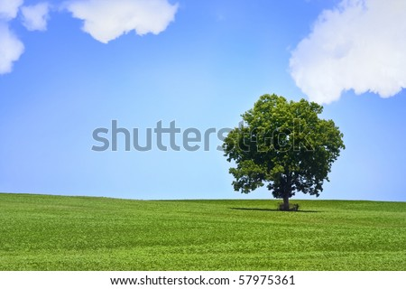 Lonely tree in beautiful green meadow with beautiful bright  blue sky