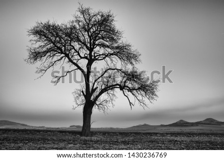 Lonely tree in Central Bohemian Uplands, Czech Republic.  Central Bohemian Uplands or Central Bohemian Highlands is a mountain range located in northern Bohemia. The range is about 80 km long