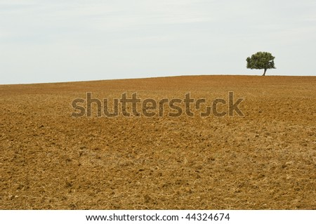 Lonely tree in drought wasteland