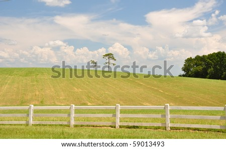 Lonely tree in Pasture