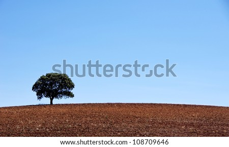 Lonely tree in plowed field