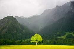 Lonely tree in sunlight. On the background Alps in the fog.