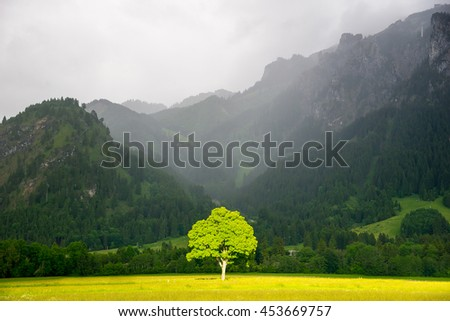 Stock Photo Lonely tree in sunlight. On the background Alps in the fog.