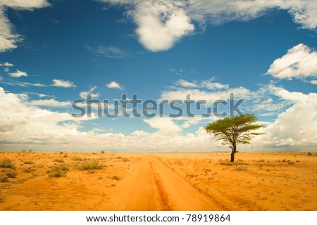 Lonely tree in the dessert