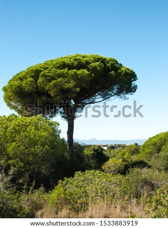 Lonely Tree in the Forest with Distant Mountains at the Background #1533883919