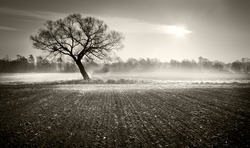 Lonely tree in the winter morning on an icy field