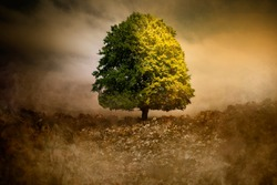 Lonely Tree in unreal surreal environment garbage nature pollution ecology