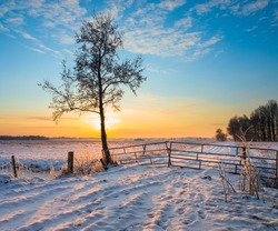 Lonely Tree in Winter Landscape with Snowy Fields and Blue Sky in Drenthe Netherlands