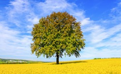 Lonely tree meadow flowering countryside landscape
