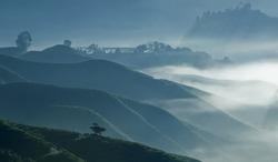 Lonely tree - Misty morning at tea plantation farm