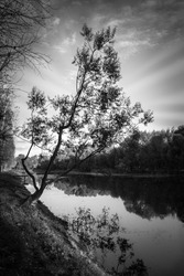 Lonely tree near a riverside of lake in black and white. Abstract sun rays