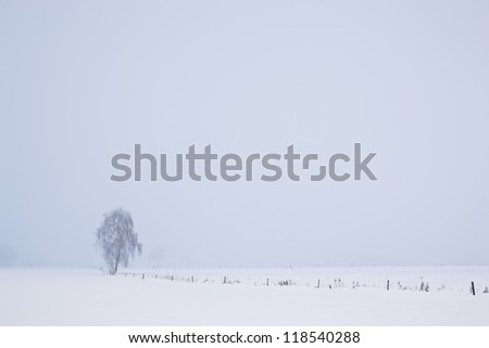 Lonely tree on a foggy winter day