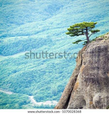 Lonely tree on a rock at Demerdji mountain, Crimea, Russia. Landscape of Crimea. Beautiful view of Crimea nature. Scenery of South coast of Crimea. The minimalist scene with green valley background.