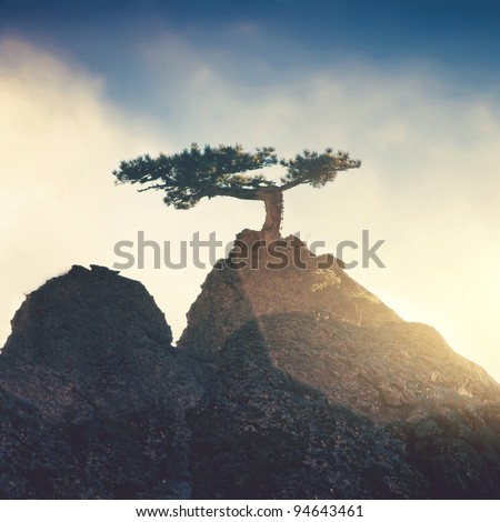 Lonely tree on a top mountain in the evening