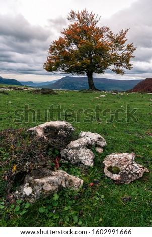 Lonely tree on an esplanade with green grass on a cloudy day, in the foreground there are some stones and some bushes, in Navarra, Sierra de Urbasa, Spain