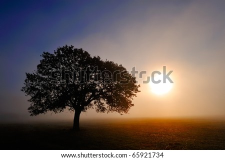 Stock Photo lonely tree on field at dawn