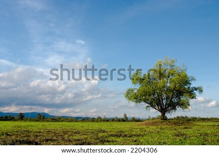 Lonely tree on meadow with interesting clouds