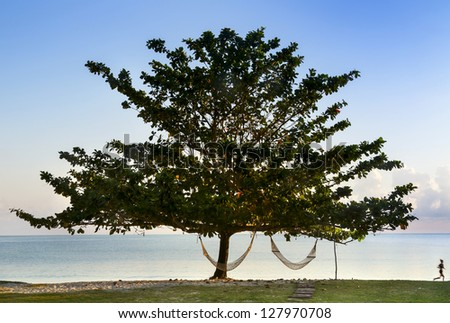Lonely tree on the beach ocean with hammocks Running woman along shore in early morning