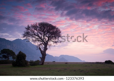 Lonely tree on the coast during sunrise