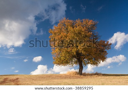 Lonely tree on the hill in autumn