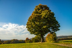 lonely tree on the hill in the colourful dress of autumn leaves