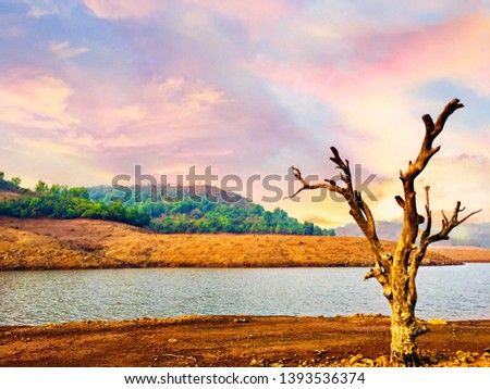 Lonely tree on the lonely lake.