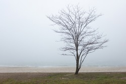 Lonely tree on the sea foggy morning background landscape