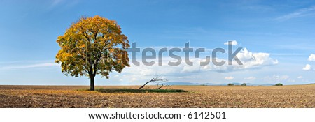 lonely tree panorama