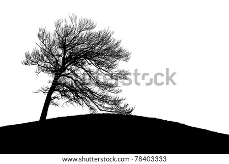 Lonely tree silhouette isolated on white background