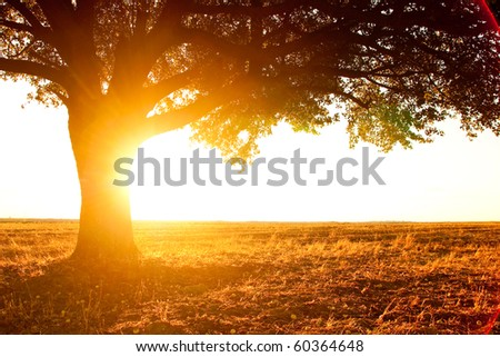 lonely tree silhouette on open field at sunset vibrant orange