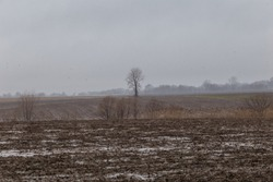 Lonely tree sits barren in a muddy farm field on a dreary day with overcast sky
