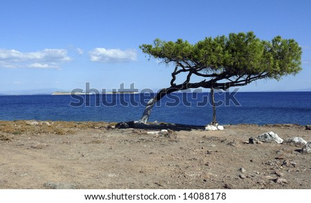 Lonely tree situated in the east part of Greek island of Lesvos. - stock photo