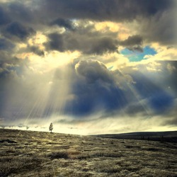 Lonely tree under dramatic sky with sun rays