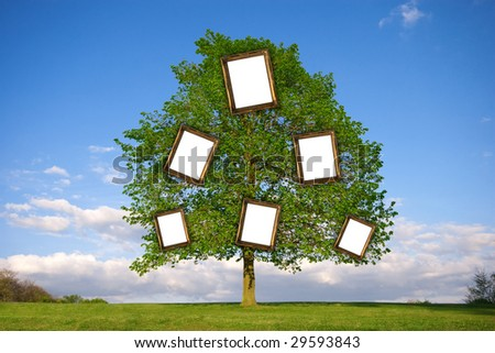 Lonely tree with empty picture frames re: Family Trees - stock photo