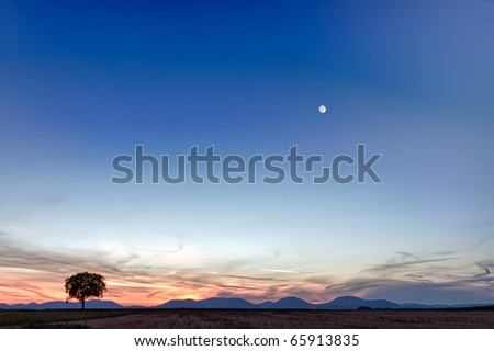 Lonely tree with mountains at dusk, Pfalz, Germany